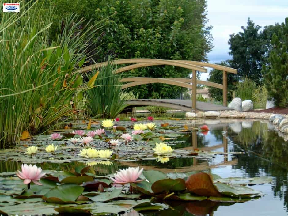 Public Park Pond - Manufacturer of Koi ponds